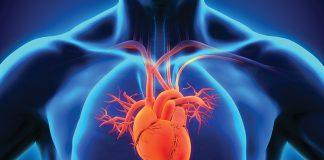 heart-health-xray-person